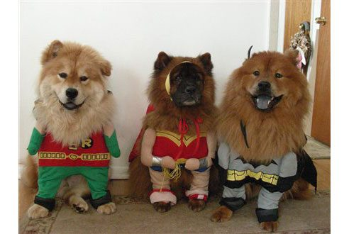 funny dog photos you need to see readers digest