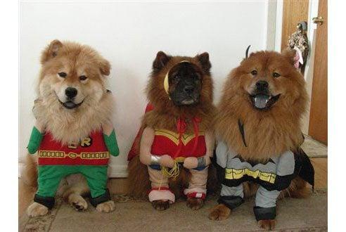 10-funny-dog-photos-03-ss
