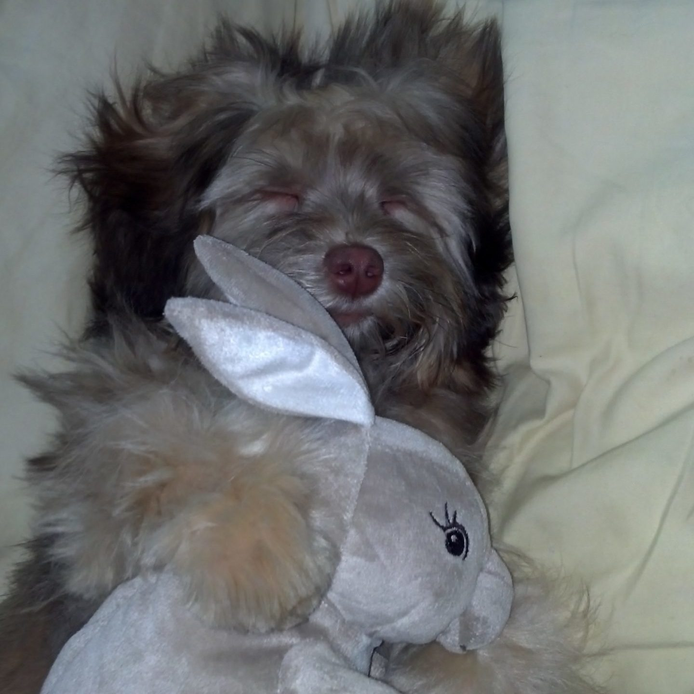 Dog cuddling stuffed rabbit