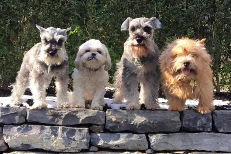 Four cute dogs standing on stones