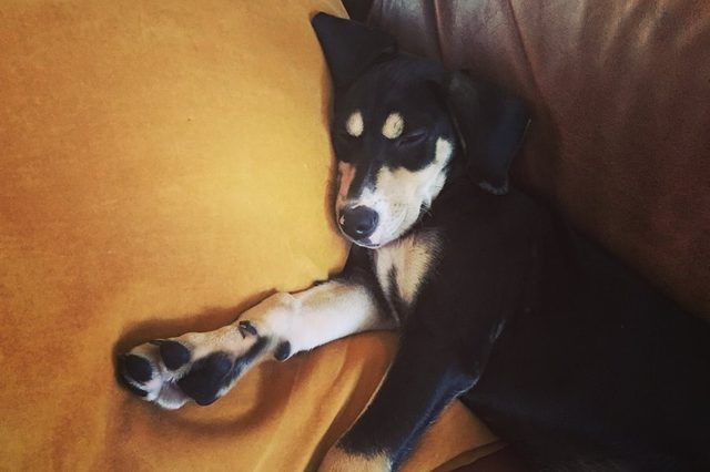 Dog napping on the couch