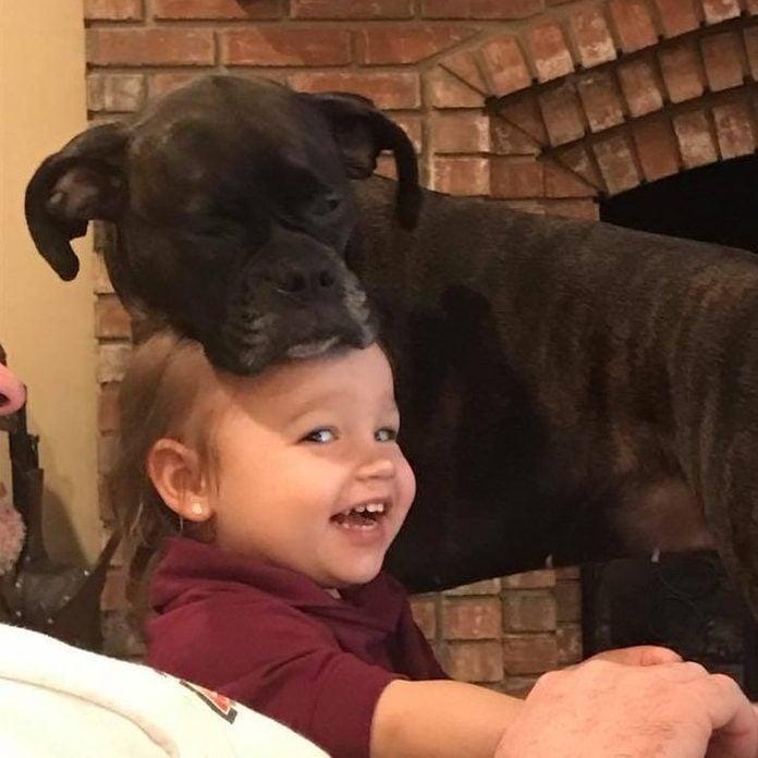Dog resting head on little girl