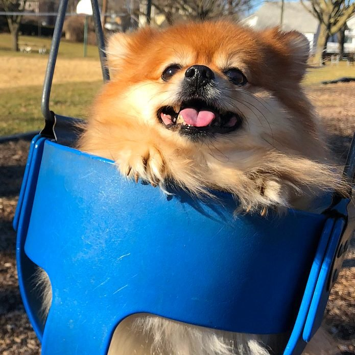 Dog in a blue swing