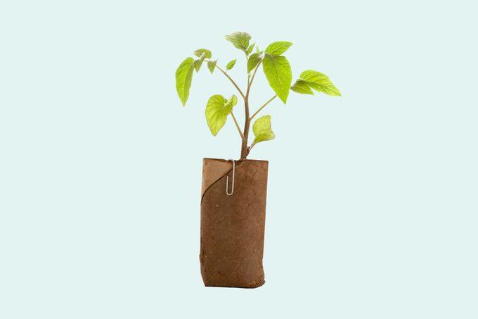 tree cardboard tube