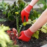 16 Ways to Kill Garden Weeds