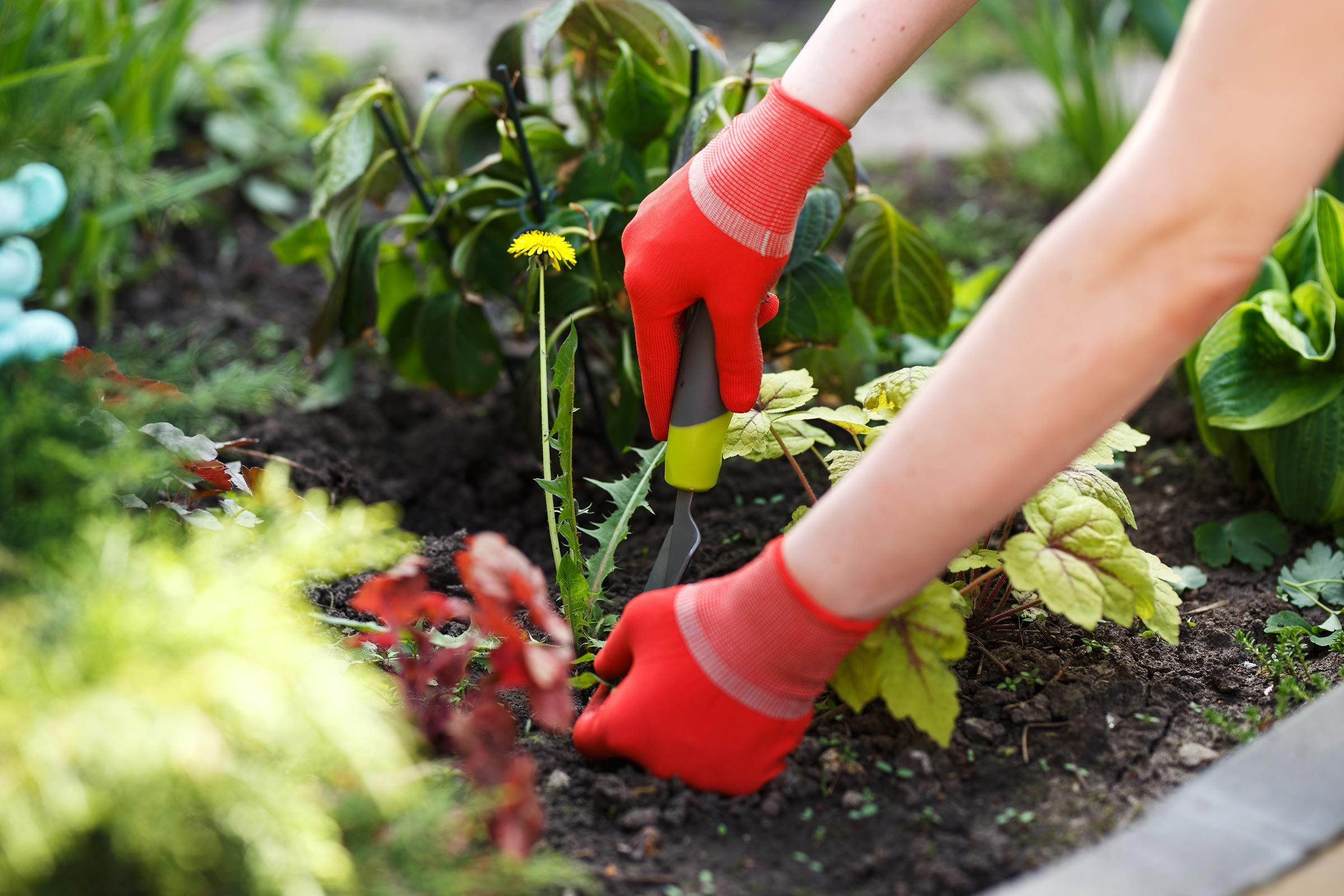 How to Kill Weeds: Ways to Kill Garden Weeds | Reader's Digest