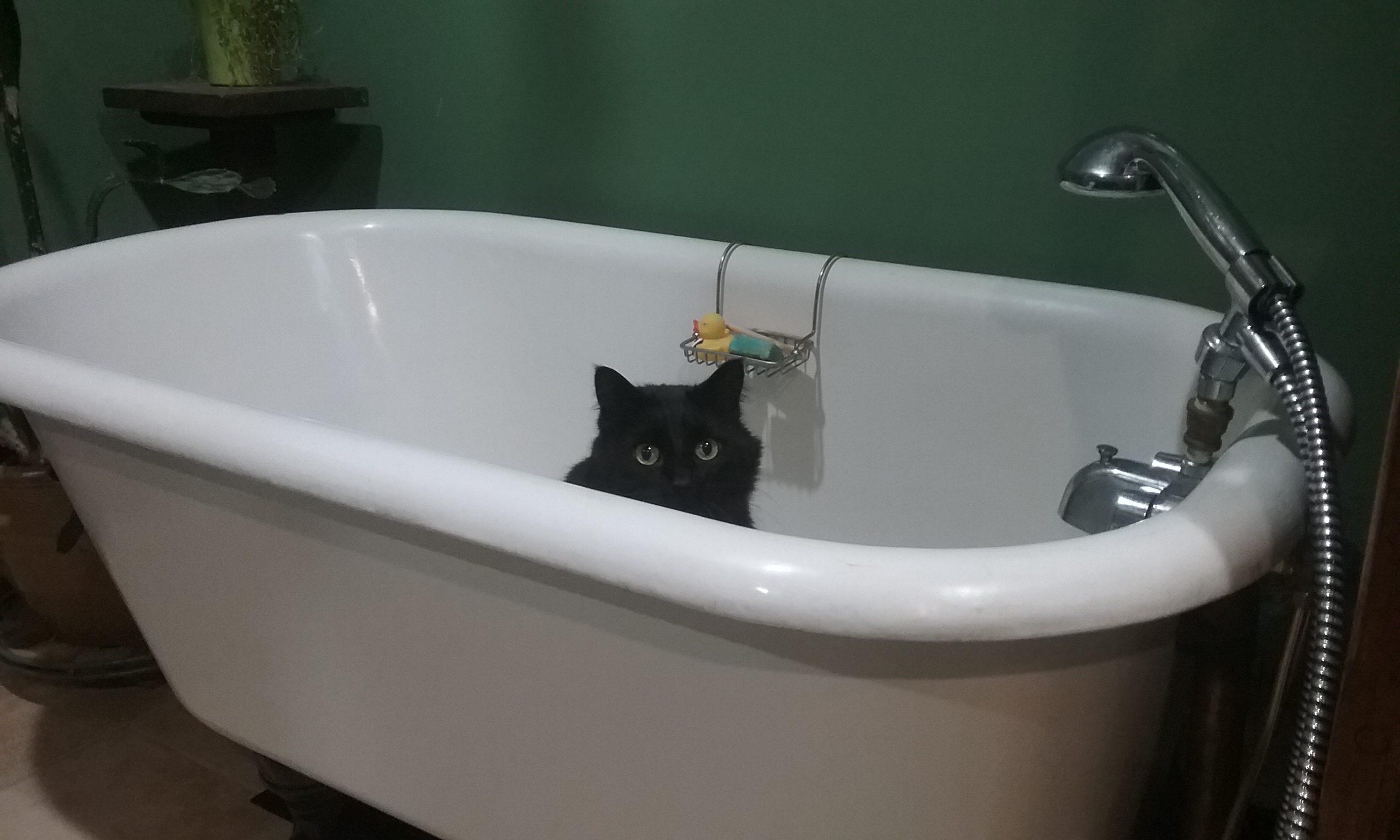 Cat Got Your Tub?