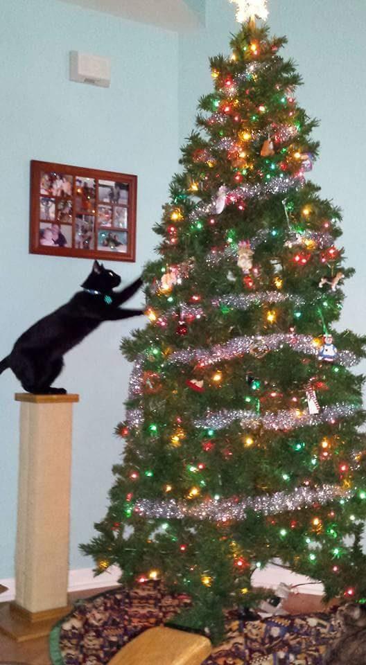 Merry Cat-mas