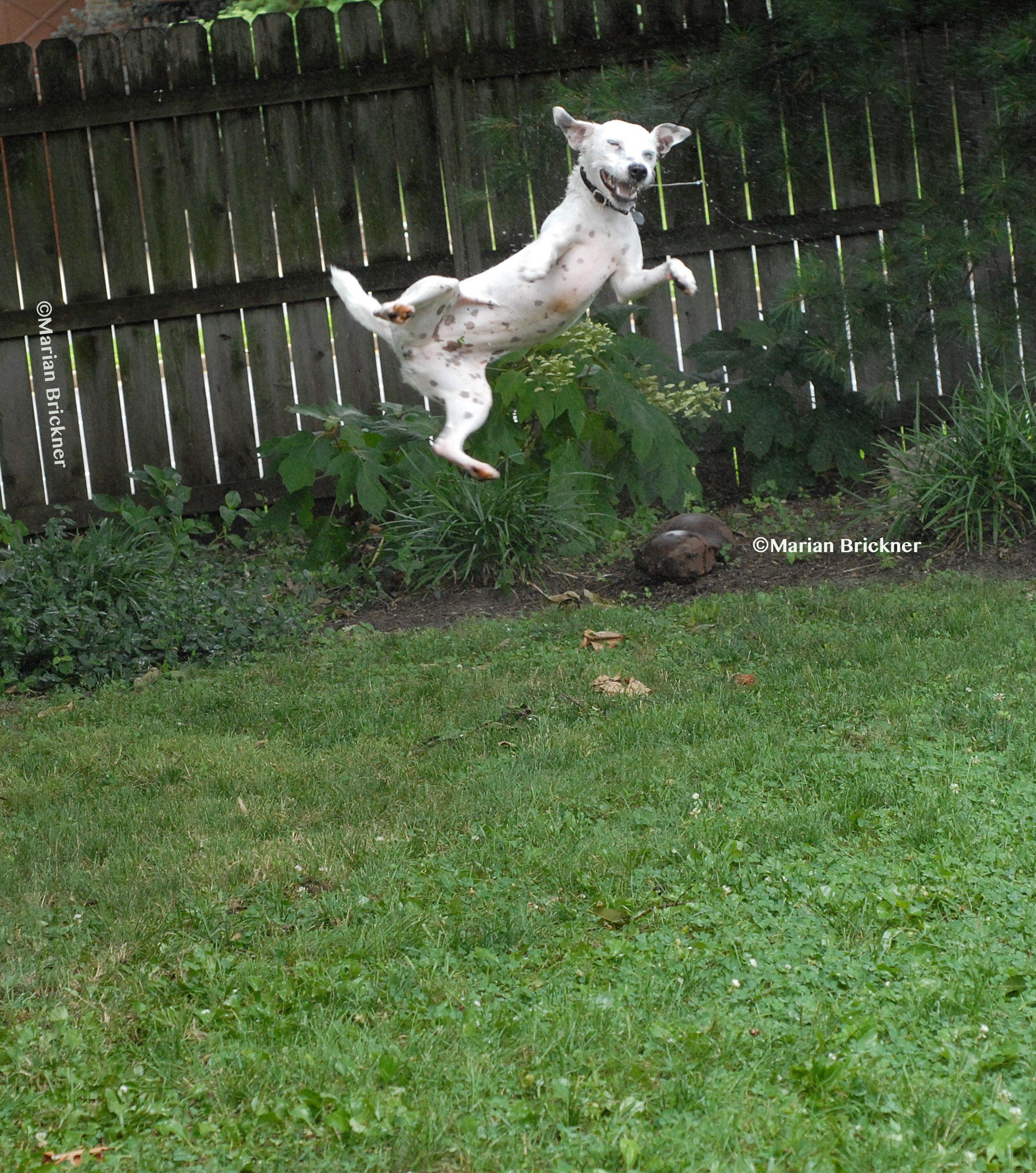 Hopping Hound
