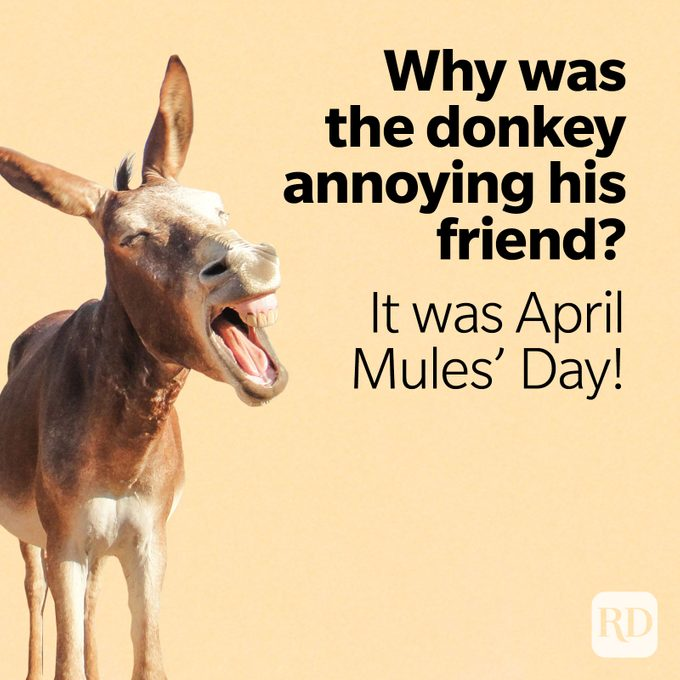 Image of donkey with text: Why was the donkey annoying his friend? It was April Mules' Day!