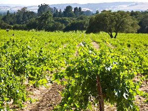 Take a Wine Country Walking Tour