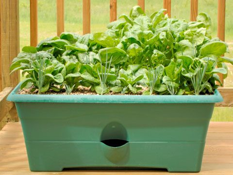 Project 3: Plant a container garden