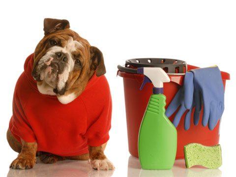 Pet Health 7 Hidden Dangers For Pets At Home Reader S