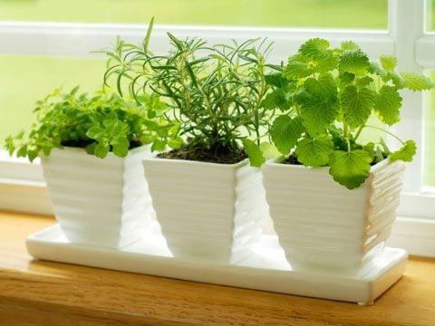 Start your herb garden