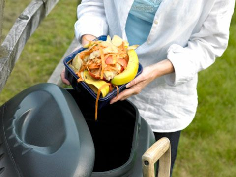 Start a compost pile.