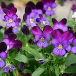 9 Colorful Flowers That Grow in Shade