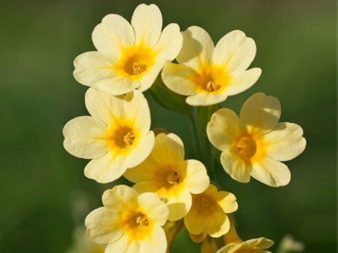 9 Best Flowers For Garden Design Reader S Digest