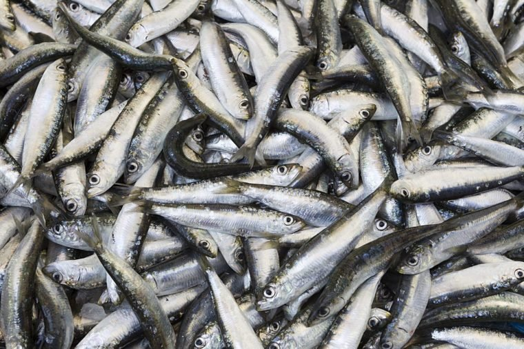Fresh fishes in a market. Close up