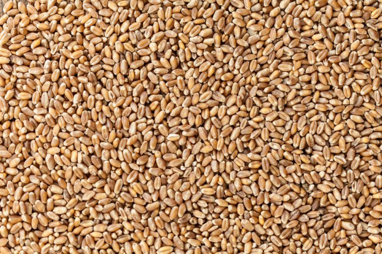 heap of wheat grains close up. Texture for background