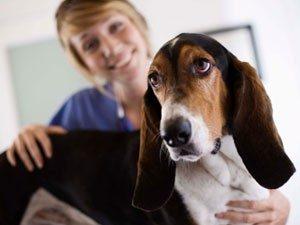 dog and vet