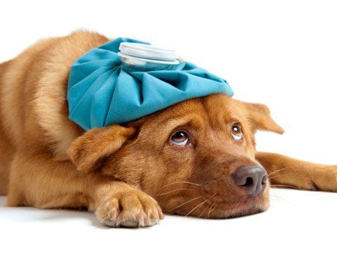 Don't bring a sick pet.
