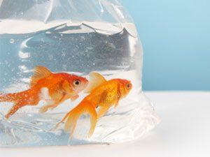 Feeder Websites Money No Fish Best Free Dating