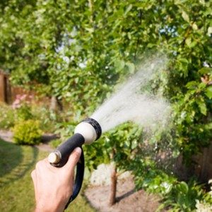 More Things Your Arborist Won't Tell You