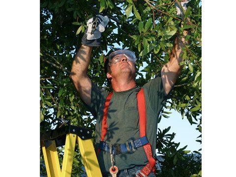 4. Tree Faller