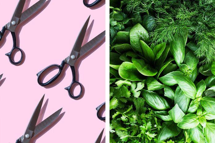 Scissors as herb chopper