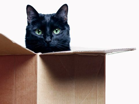 Too intense for you or your feline friend? Try a plain old box.