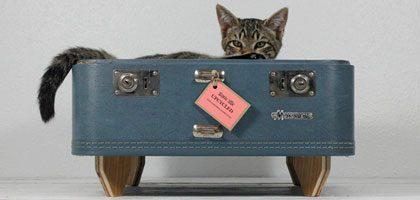 crazy cat beds