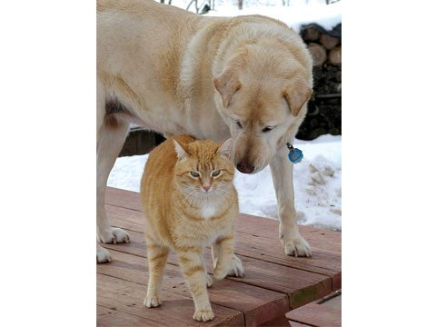 The Seeing-Eye Cat and the Blind Dog