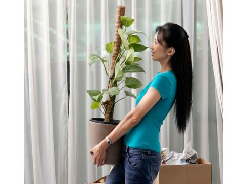 Plant Indoor Garden 10 tips for planning your indoor garden readers digest position plants carefully workwithnaturefo