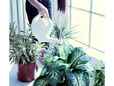 http://www.rd.com/wp-content/uploads/2011/09/10-Ways-to-Plan-Your-Indoor-Garden-02-sl.jpg