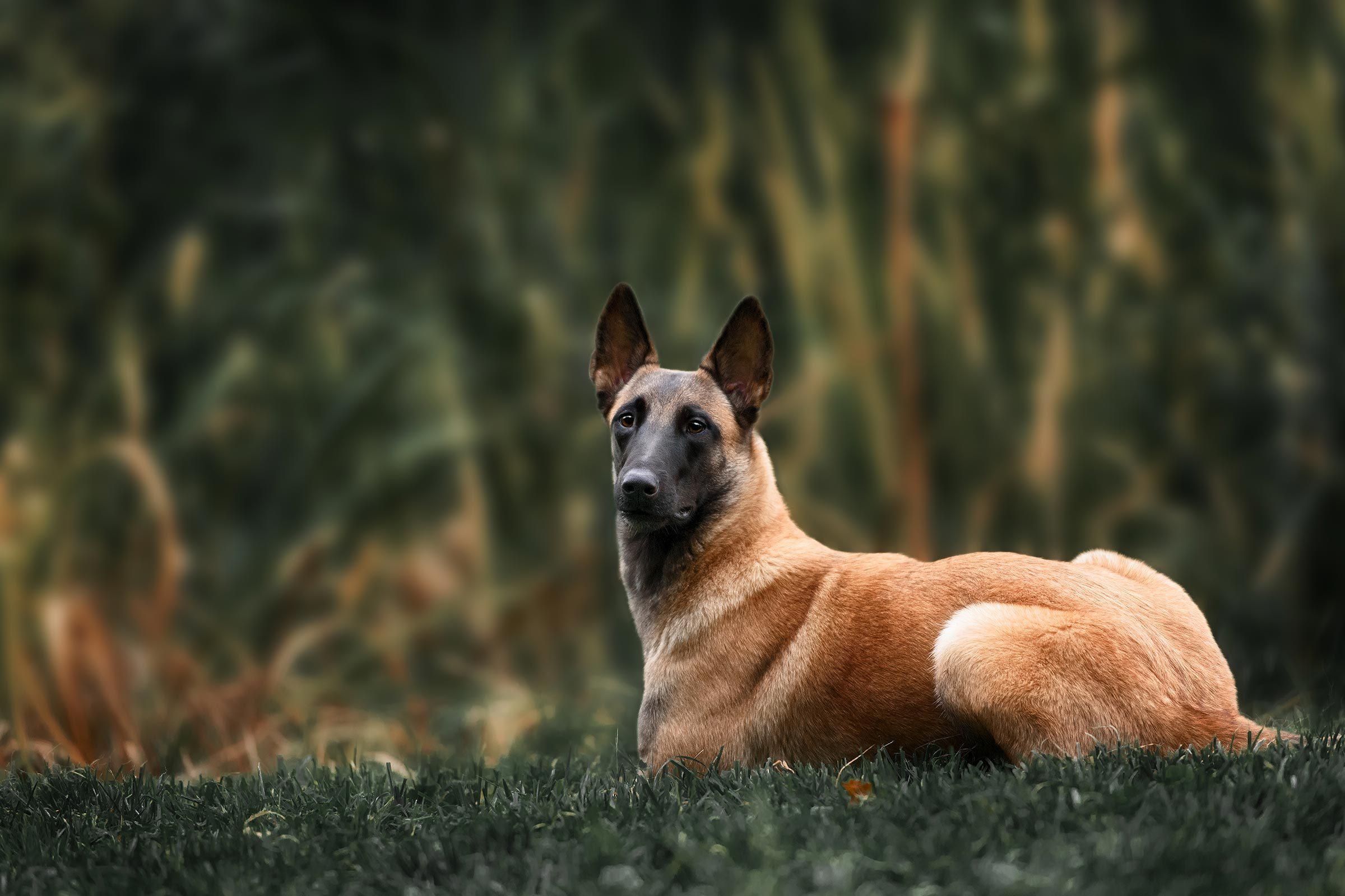 15 Dog Park Etiquette Rules You Should Never Break