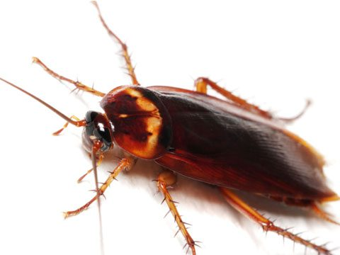 4. Exterminate roaches and repel insects