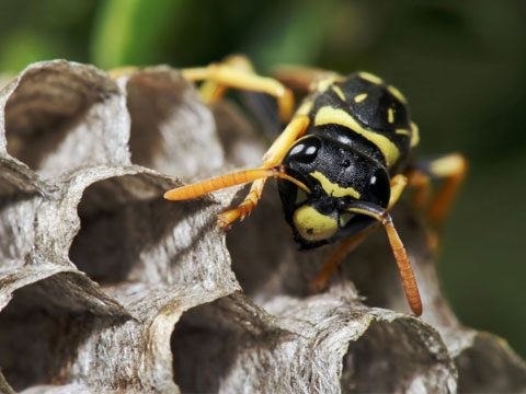 12. Keep wasps from building nests