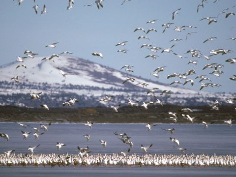 Klamath Falls, Oregon: Winter Wings Festival