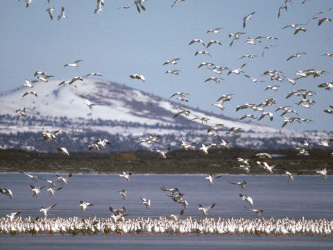Klamath Falls, Oregon: Winter Wings Festival
