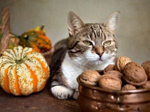 Thanksgiving Foods That Are Toxic to Cats and Dogs