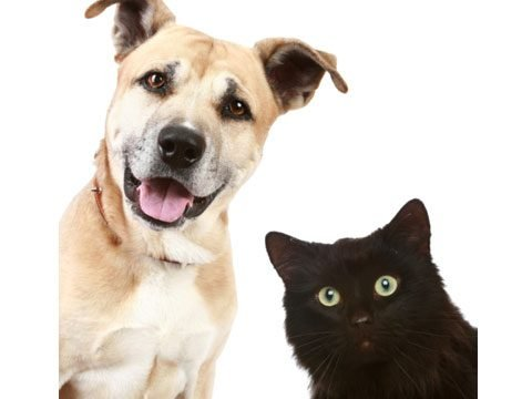 dog versus cat people statistics