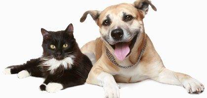 Dog People vs. Cat People: The Surprising Differences