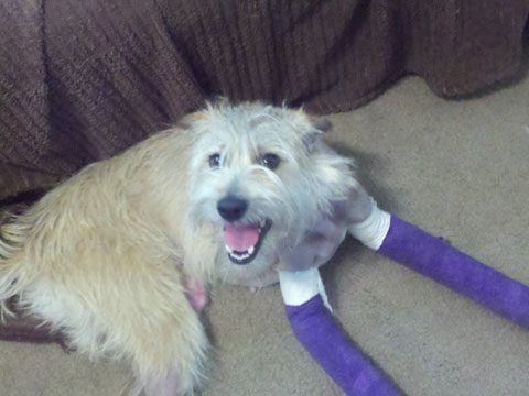 Mason: The Miracle Dog