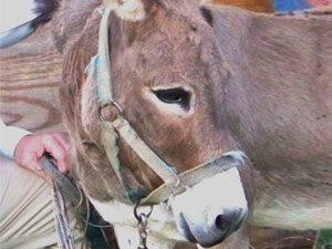 Molly the Miracle Donkey