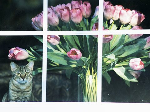 Yes, your flowers look beautiful in the window...