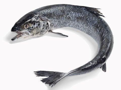 4. Fish