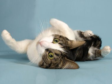 2. Why Do Cats Roll on the Floor?