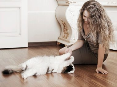 5. Why Do Cats Act Up?