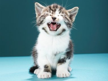 3. Why Do Many Cats Meow Incessantly?