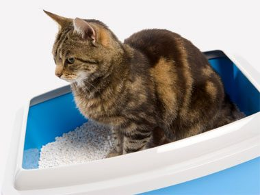 4. Why Do Cats Misuse Their Litter Boxes?